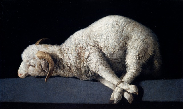 'Agnus Dei' ('Lamb of God') painted by Francisco de Zurbarán (1598-1664) (Museo del Prado, Madrid).  A wonderful depiction of a lamb ready to be sacrificed, and representing Jesus as the Lamb of God (see Isaiah 53.7, Acts 8.32).