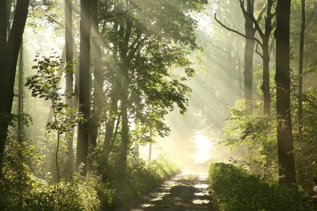 Forest, sunlight, path, trail, Kingdom of God, New Earth, New Heaven and Earth